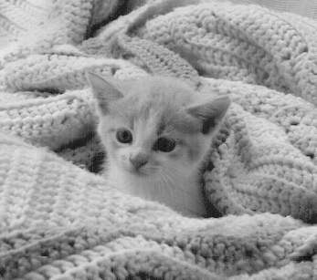 kitten in blanket
